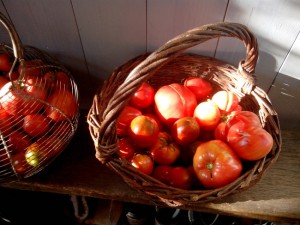 tomates exquises du jardin