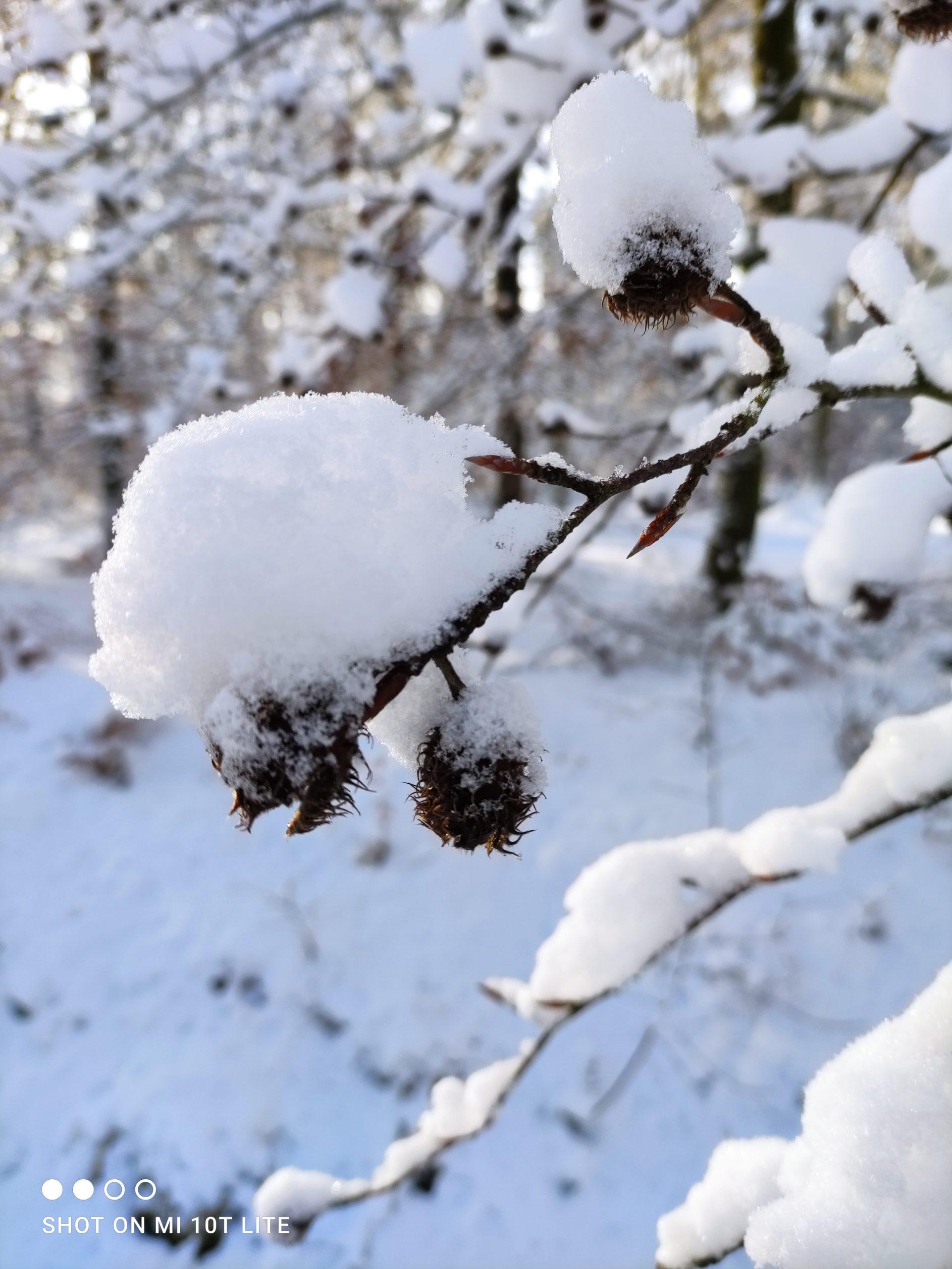 neige en janvier